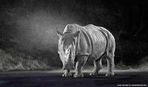 Endangered_Species_Photography-Fine_Art_Photography-by-Photographer-Lindsay_Robertson